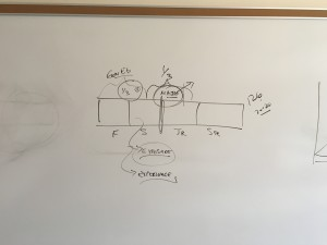 Stacy's diagram Economics and Business -- CFL Philosophy