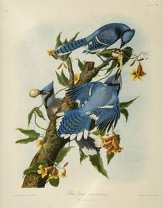 Illustrations of animal and wildlife