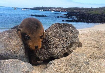 Los Lobos (aka Sea Lion Paradise)