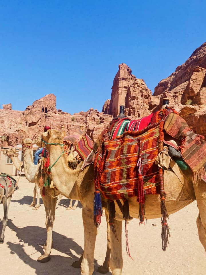 While we didn't ride any animals at Petra, the camels were beautiful, and so much fun to look at.