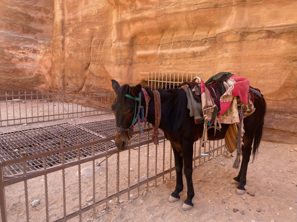 Donkeys are common in Petra, as well as horses.