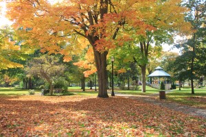 Fall in Centennial Park