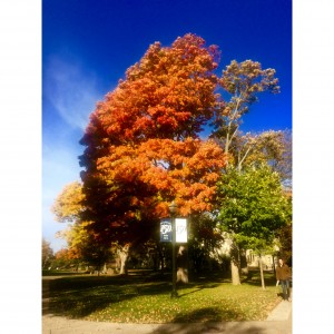 Fall colors at Hope College