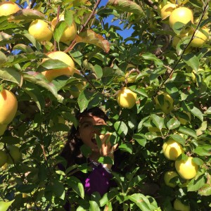 a girl grabbing an apple on the other side of a tree.