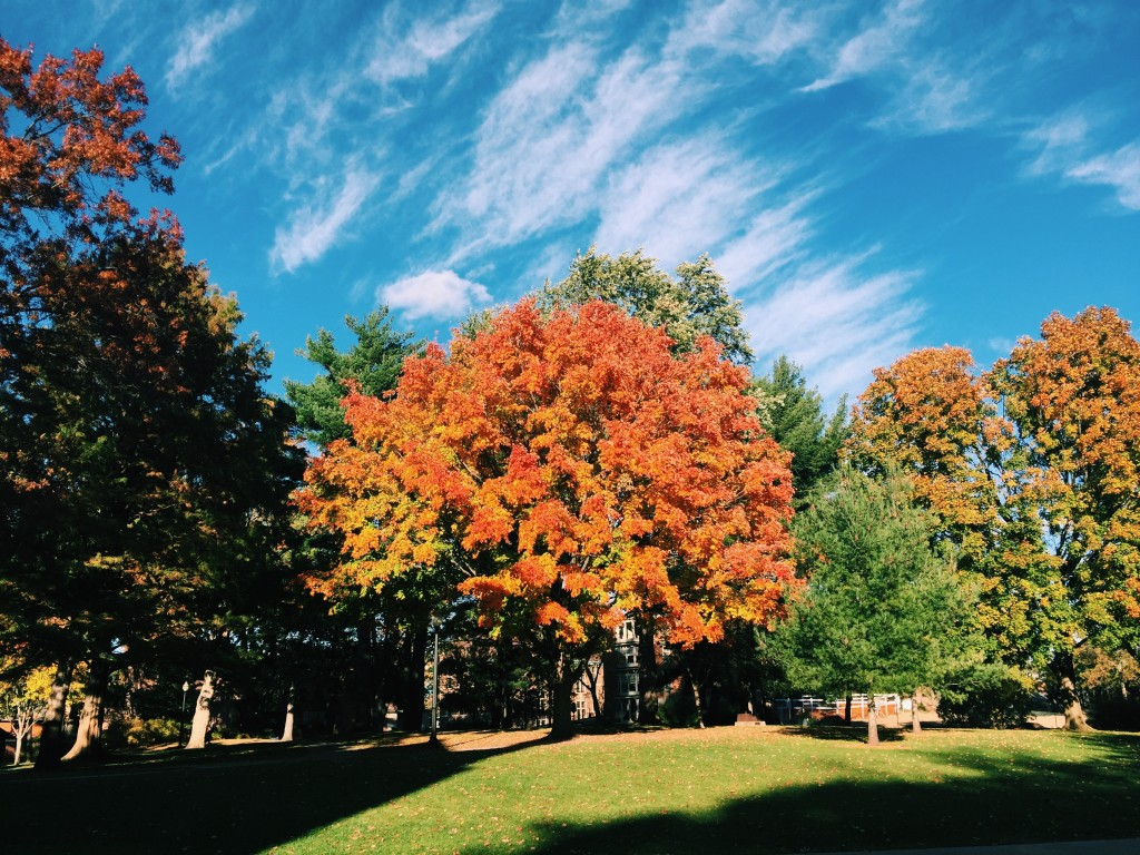The Pine Grove at Hope College