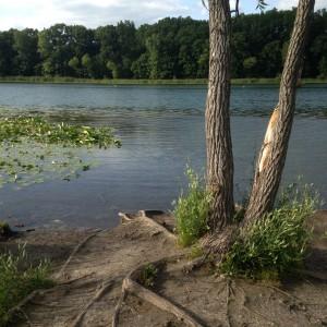 Asylum Lake is beautiful.