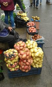 This is just of small sample of 400 different types of potatoes that people at Chiloé are able to grow.