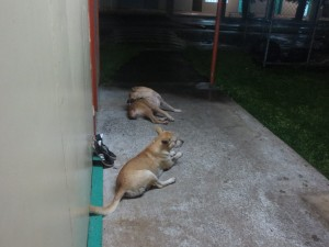Dogs outside my door at night.