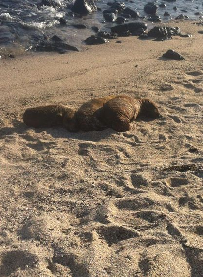 Baby sea lions curled up at La Loberia