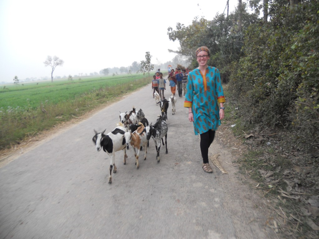 Went for a walk one night and was followed by a pack of goats. This is the opposite of a problem.