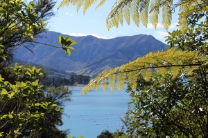 A quick snapshot of the drive out of the Marlborough Sounds