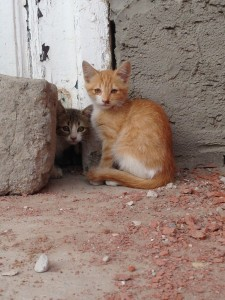 Some shy little kittens we found in Le KEf.