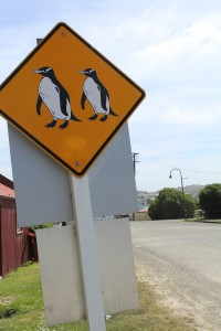 In New Zealand we have penguin crossing signs instead of deer.