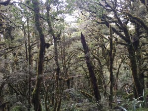 Part of the Routeburn Track walk