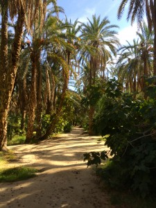 Inside an oasis.