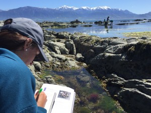 Tiffany recording our observations while tide pooling