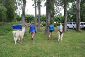 Couldn't leave without one last llama walk with Sarah!