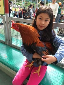 This girl was so good at catching the rooster and holding him!