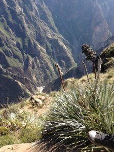 A view into the Colca Canyon